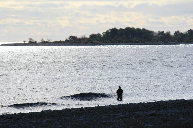 Bungeör från Ryssnäs. Foto: Arne Eklund